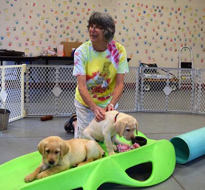 LIFT: Susquehanna Service Dogs